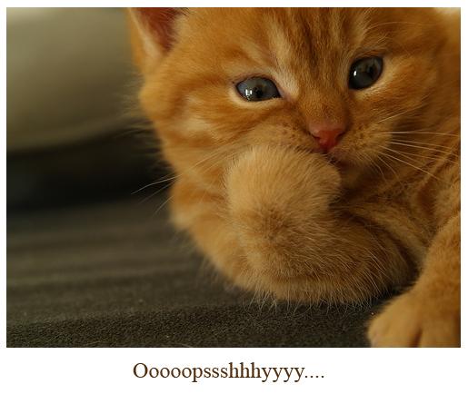 oops cat